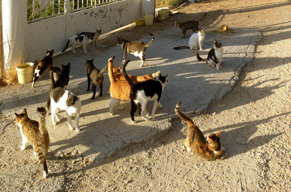 Idiom of the week: Herding cats