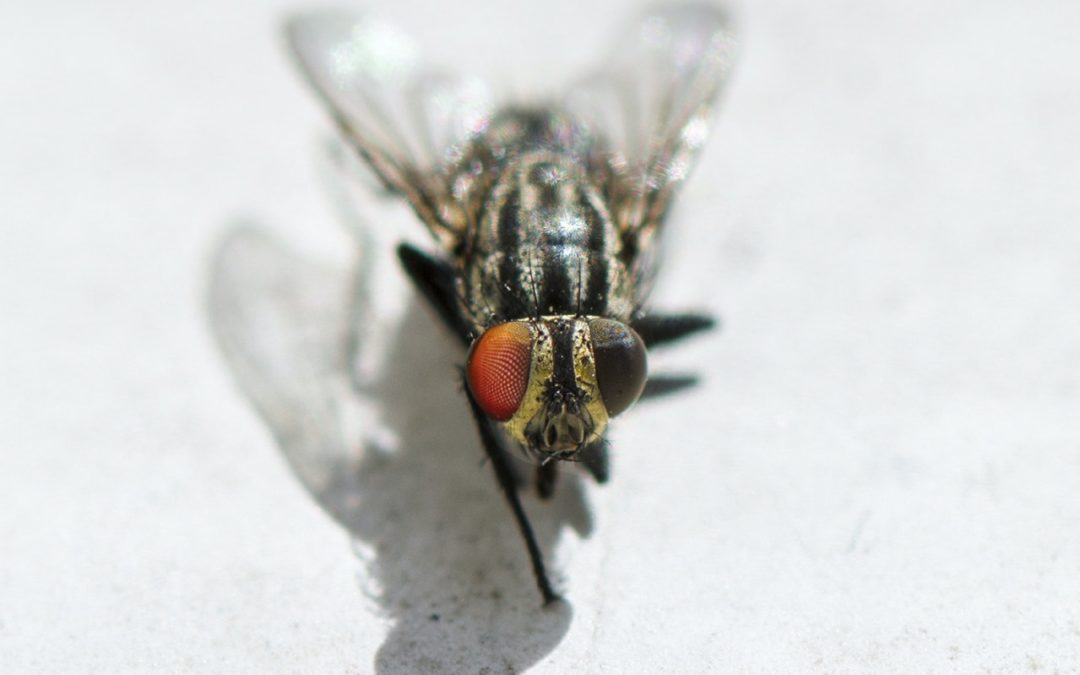Idiom of the Week: A fly on the wall